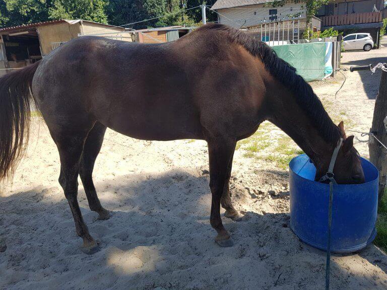 paarden en hitte